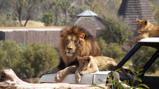 1058_San Diego Zoo 2