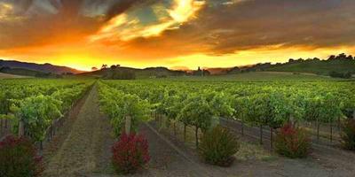 temecula_wine2